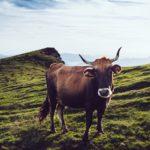 日米貿易協定によりゲノム食品やホルモン投与牛を米国から大量輸入!国民の健康と命が縮む日
