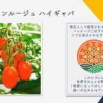 ゲノム編集食品日本に登場?第1号と思われるトマトとは?