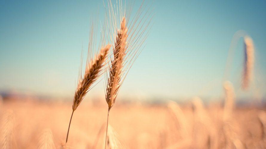 種苗法改正とは?わかりやすく解説。消費者にとって大変なことになる意味とは?